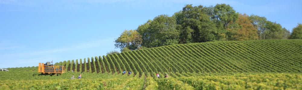 Wijngebieden met Italiaanse witte wijn
